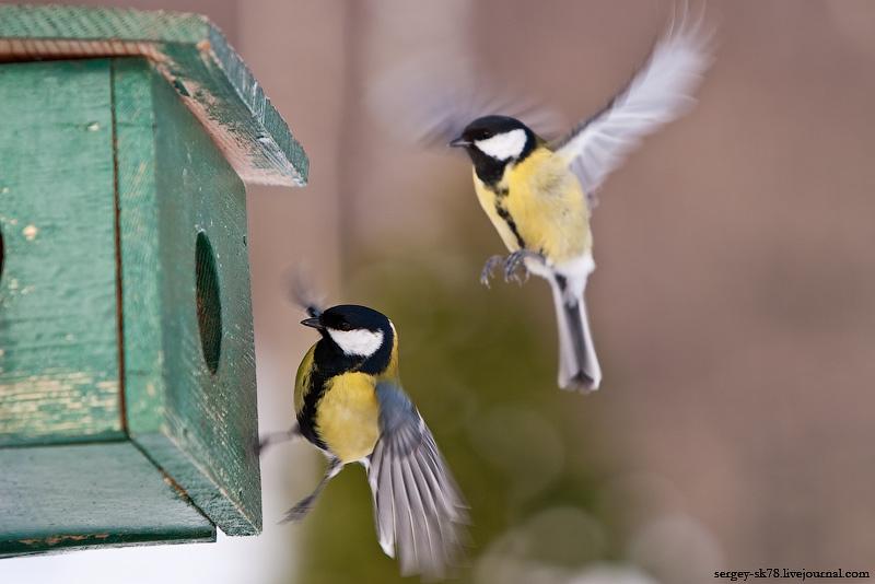 Дрова. Скворечник для птиц своими руками.