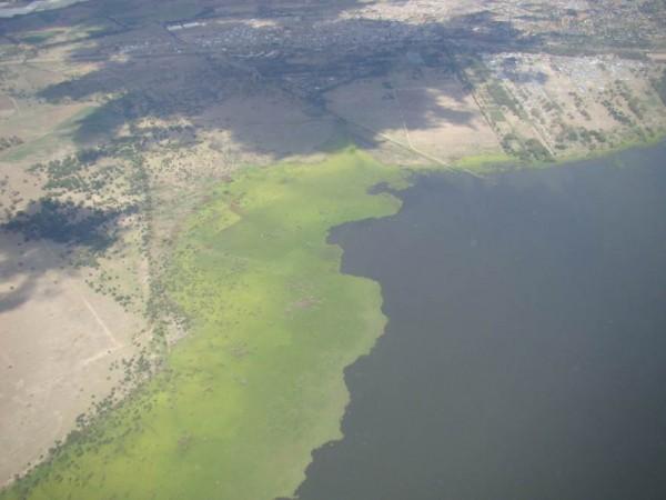 Над изрядно заболоченным озером