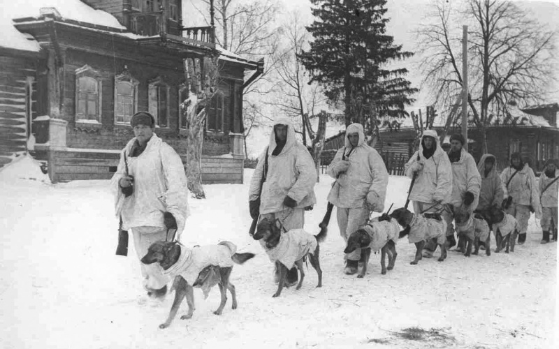 Советские солдаты-вожатые ведут собак-истребителей танков.