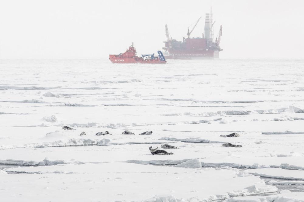«Приразломная»: проверено тюленями