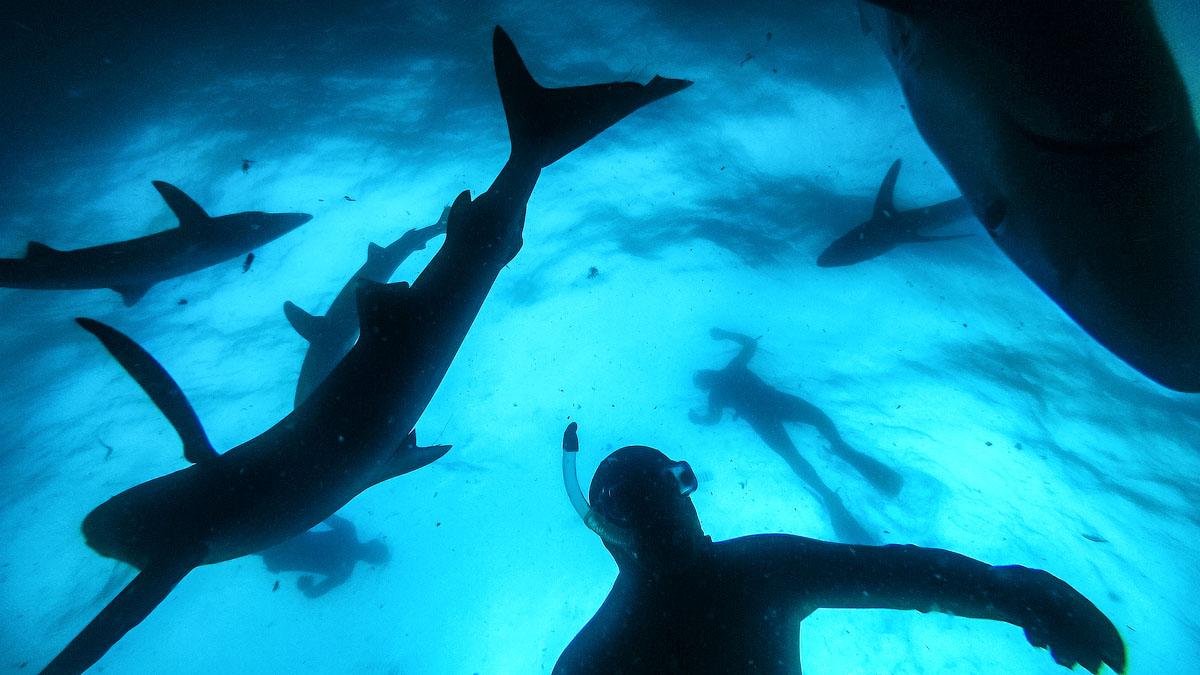 Я боюсь акул