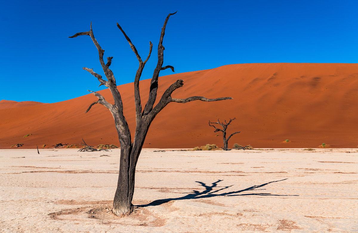 Самая древняя пустыня в мире