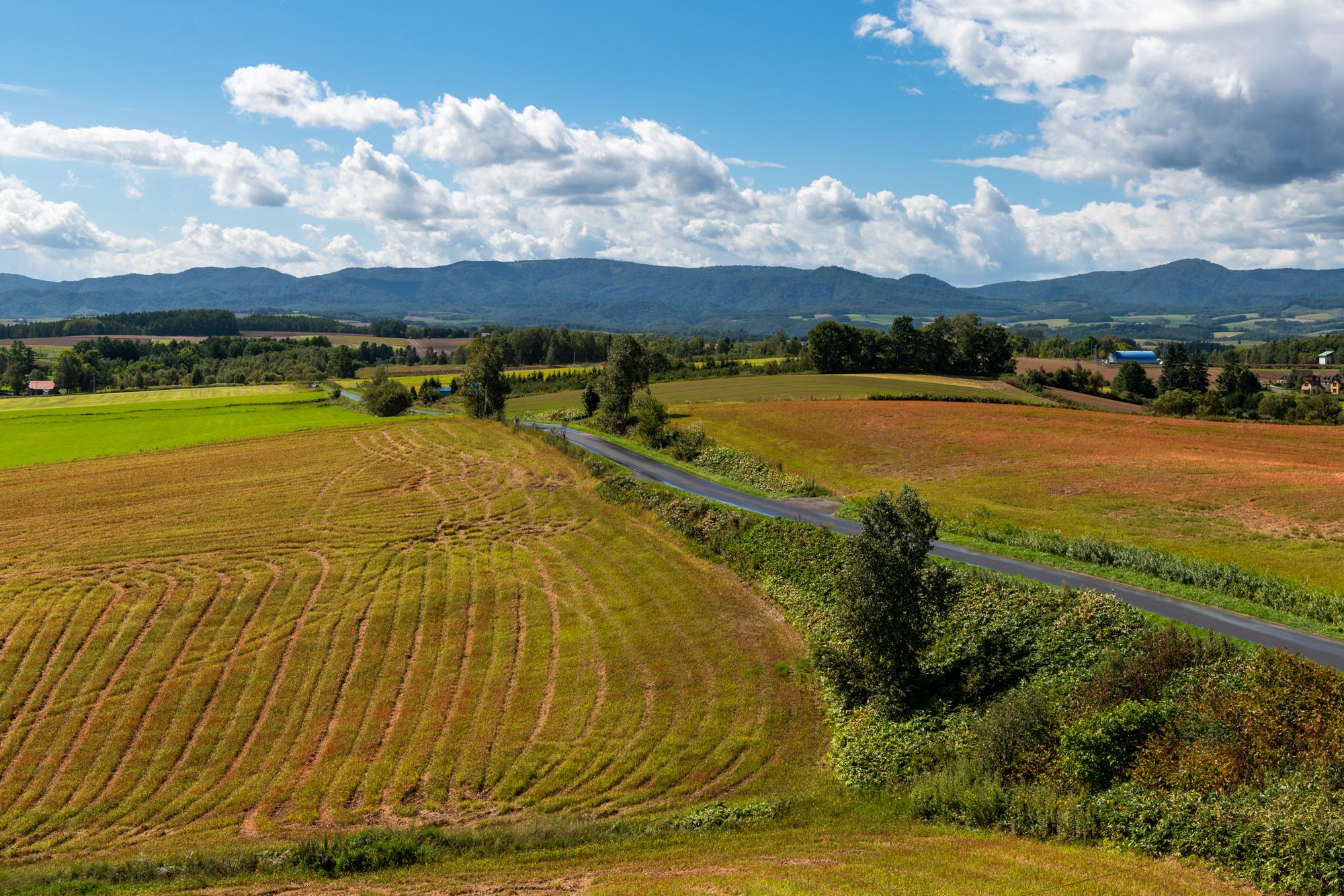 Лоскутные сельхозполя Хоккайдо Хоккайдо, рекламе, дерева, деревья, сигарет, сладкие, Например, спокойно, можно, работает, Японцы, будет, очень, Сахалина, напомню, прямо, Курильских, центре, здесь, самой