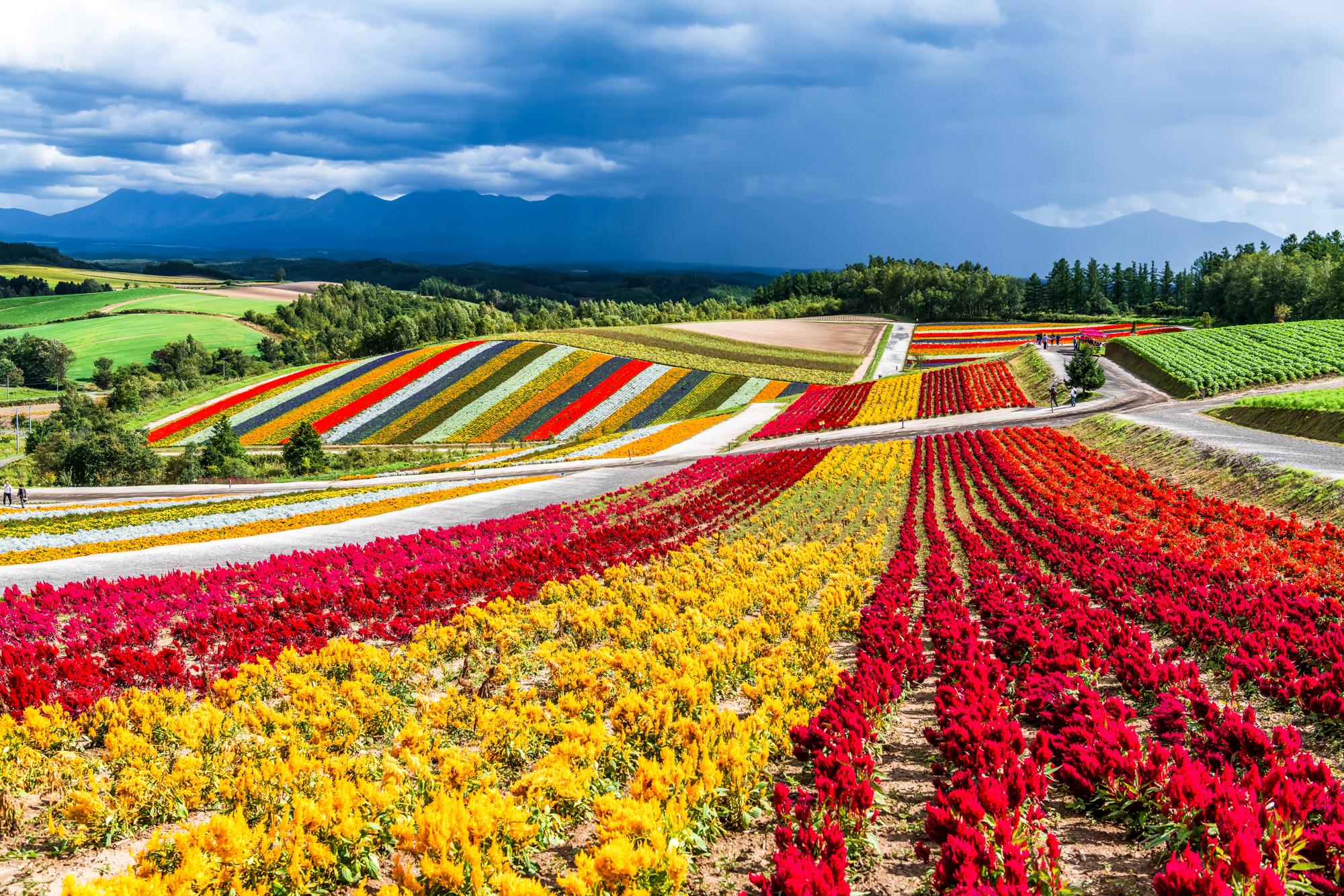 Цветочная ферма бизнес план бизнес идей работы в интернете