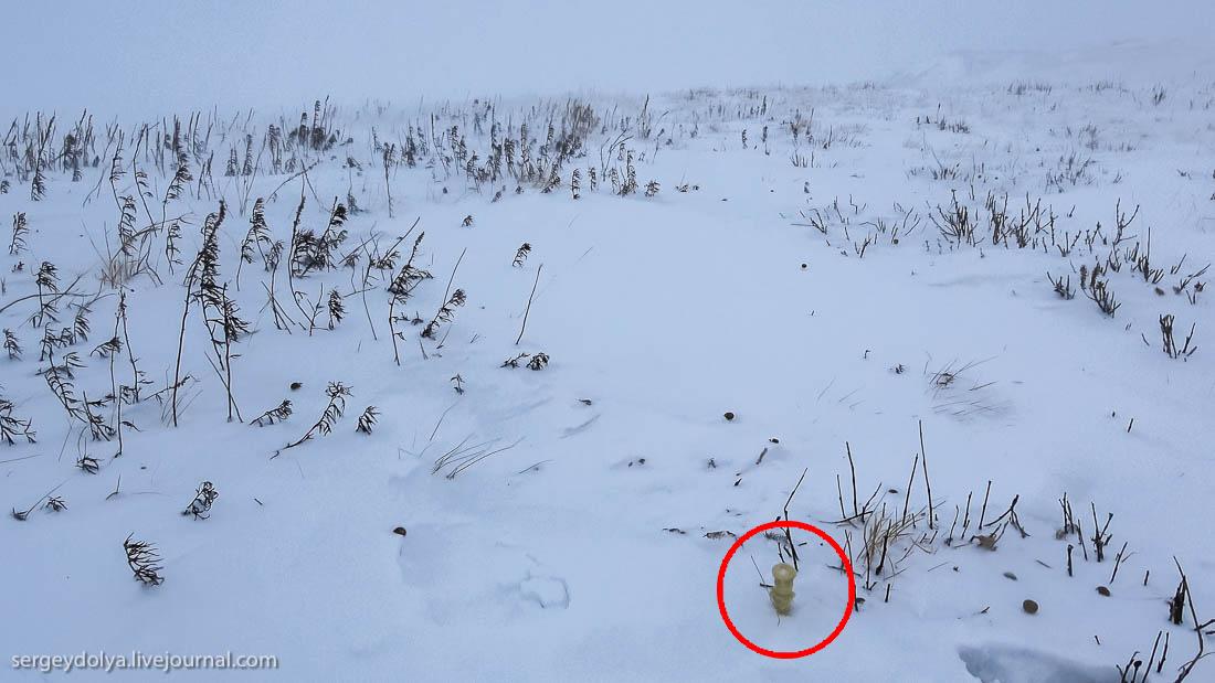 Загадка: желтые столбики на снегу