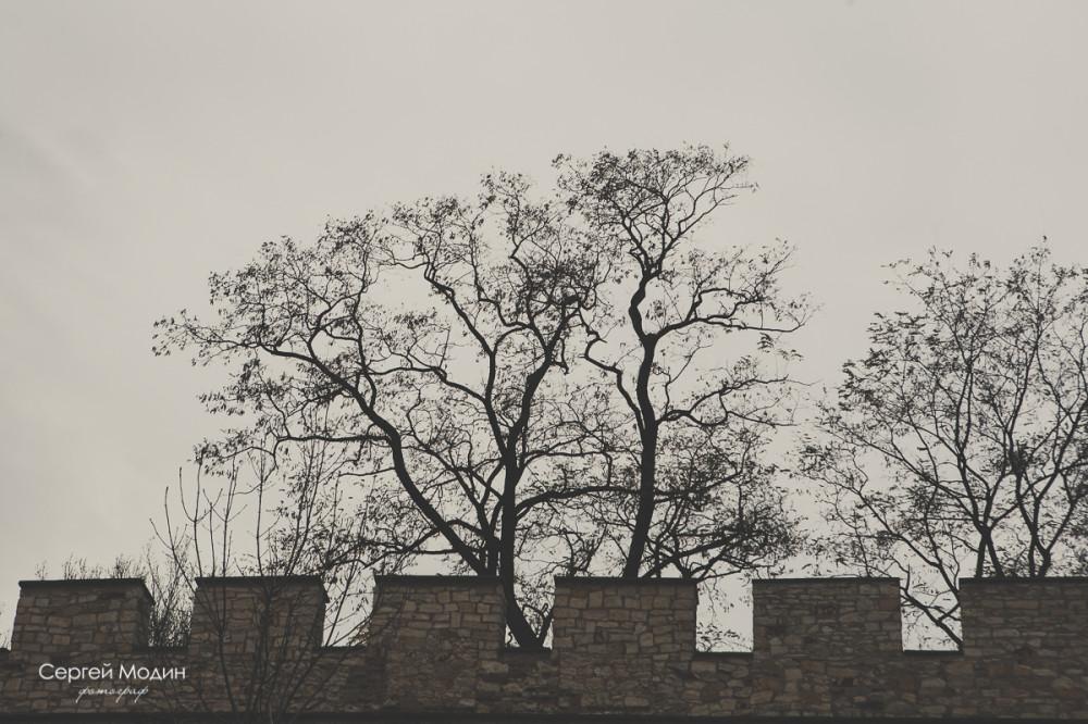 photo (152 of 191)