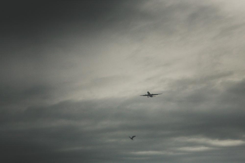Самолет и птица в небе - Новая Зеландия