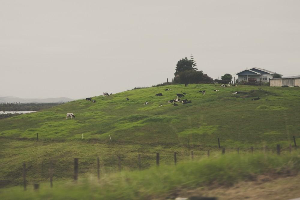 Пейзаж за окном машины - Новая Зеландия