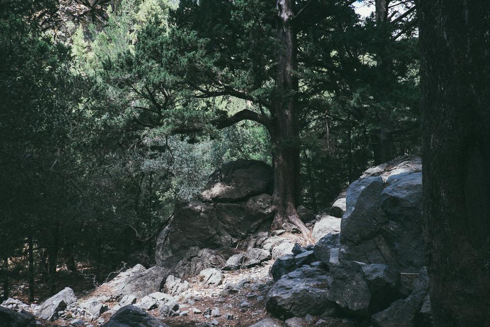 photo (12 of 85)
