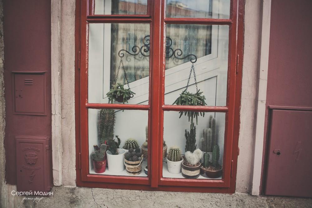 кактусы в окне - Прага