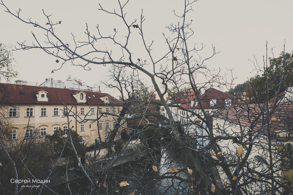 Деревья и здания - Прага