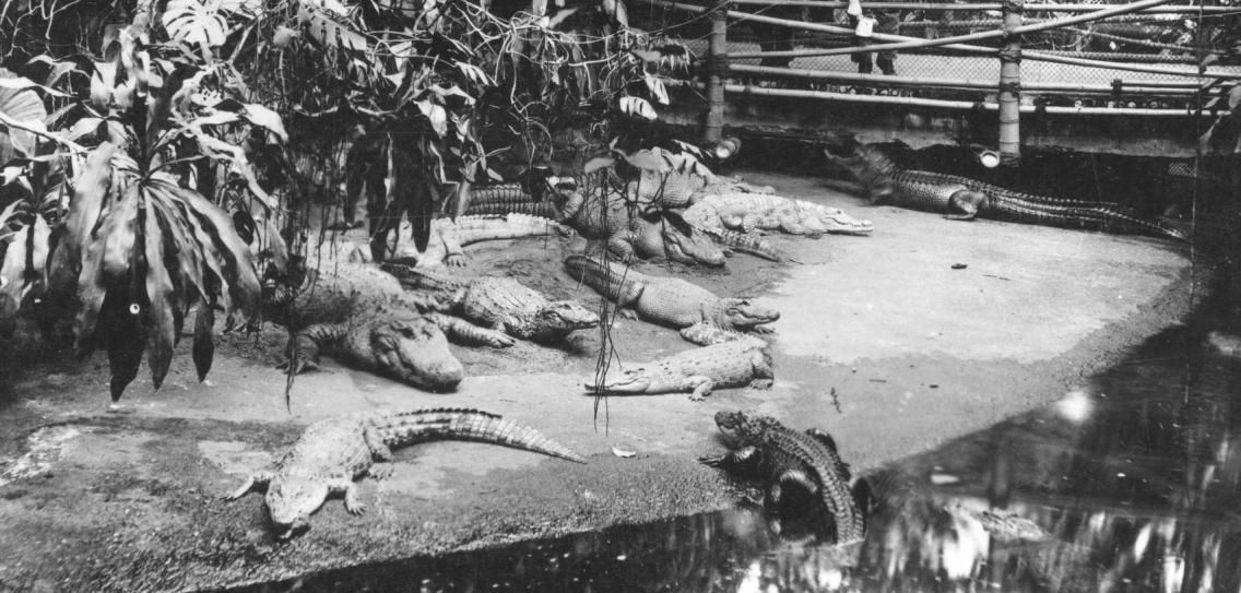 Тропический зал в Берлинском аквариуме с его обитателями, около 1930 года