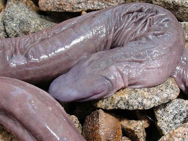 Секс змея