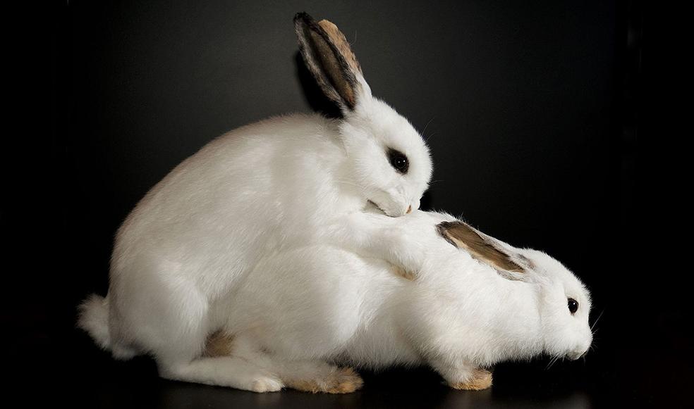 Ебуться как кролики