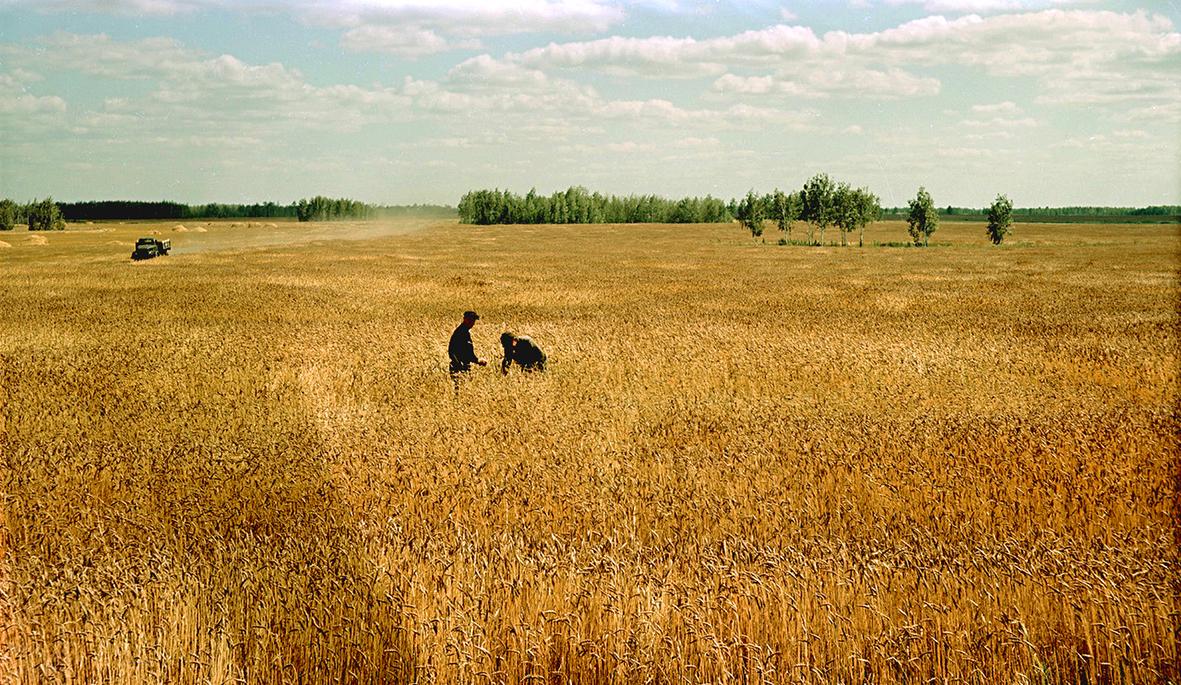 Казахстан целинный