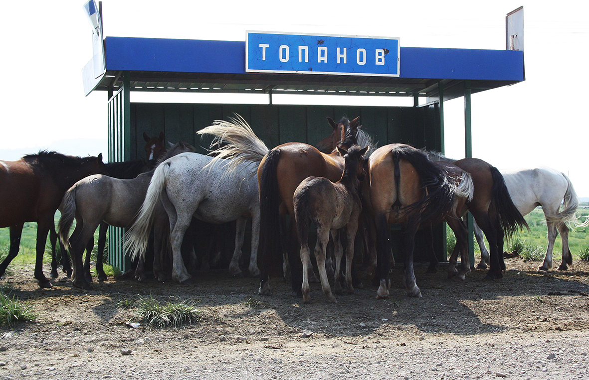 Туса кобыл села Топанов