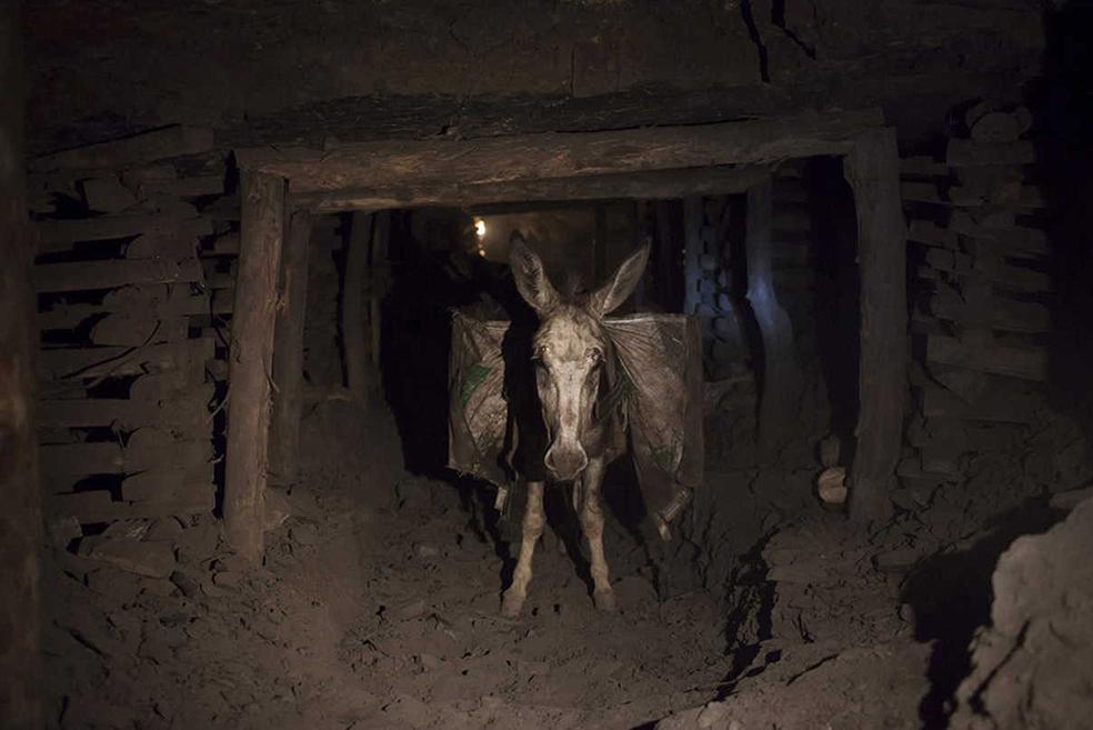 Кузбасский ишак всё вывезет