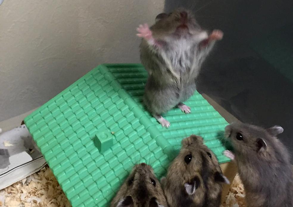 Главкрыса несёт истины свет