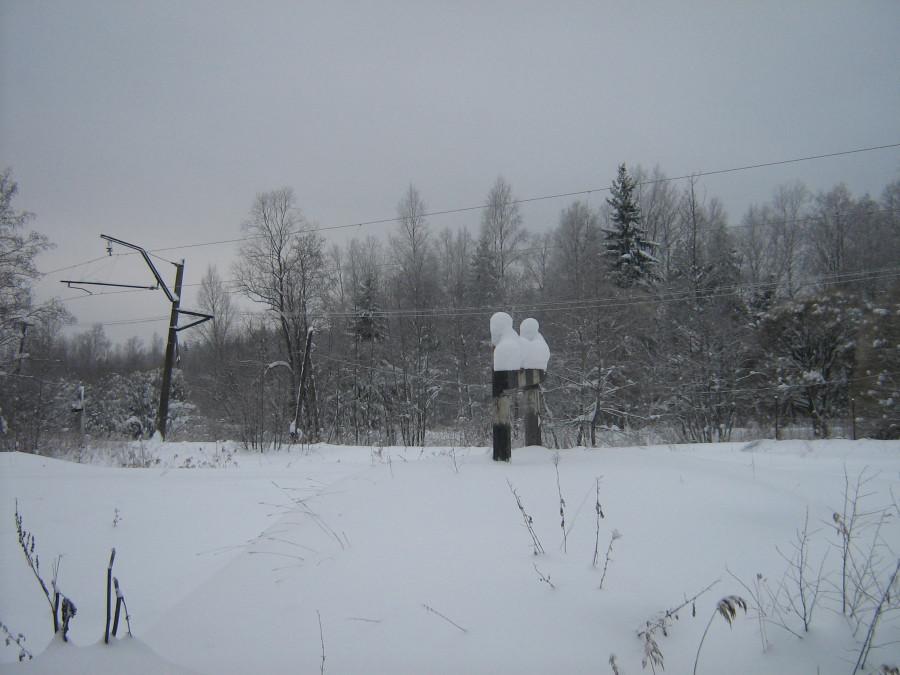 2010 январь 016