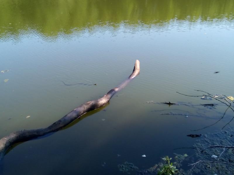 Рыбалка на Лягушатнике