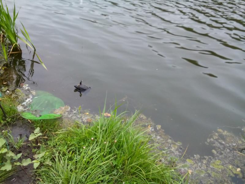 Рыбалка на Лягушатнике 2