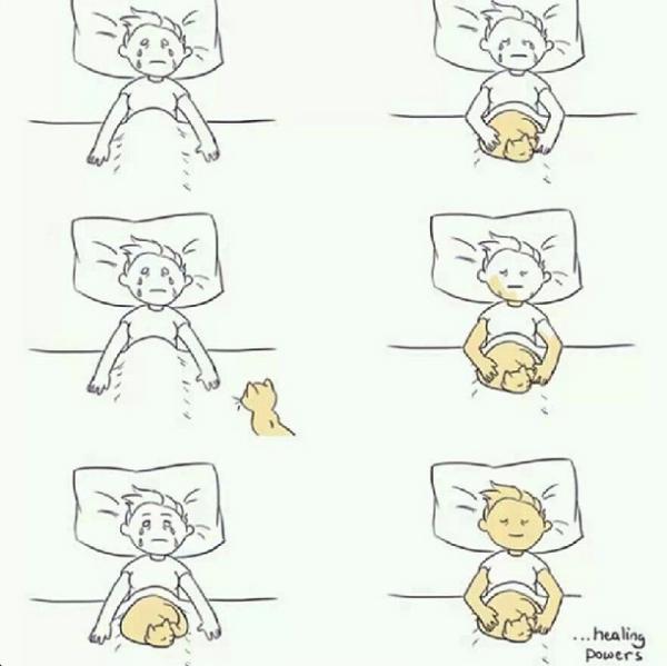 sooyoon cats
