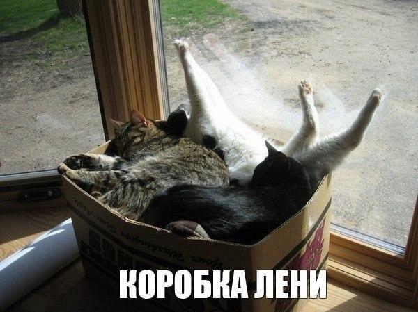 VK_Saved_Photo_ 635754929239140721.jpg
