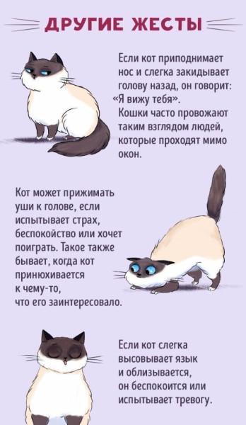 Поведение кошек в картинках
