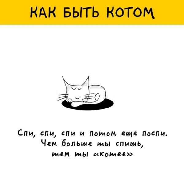 Как быть котом (вместо пятничных котиков)