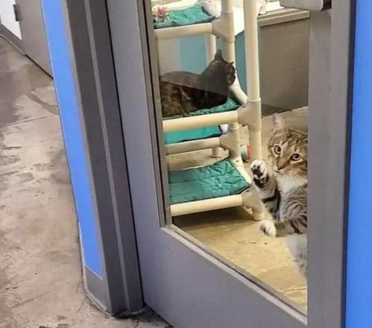 Квилти и его заклятый враг - дверь (Фото: Организация спасения животных «Друзья на всю жизнь»)