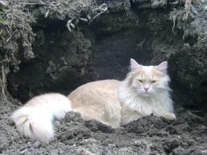 Кот Пуршик. Погиб на свободном выгуле в возрасте трех лет.