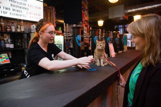 Он все время говорит, что ему пора в лоток, когда нужно платить за выпивку (Фото: Mercury Press & Media)