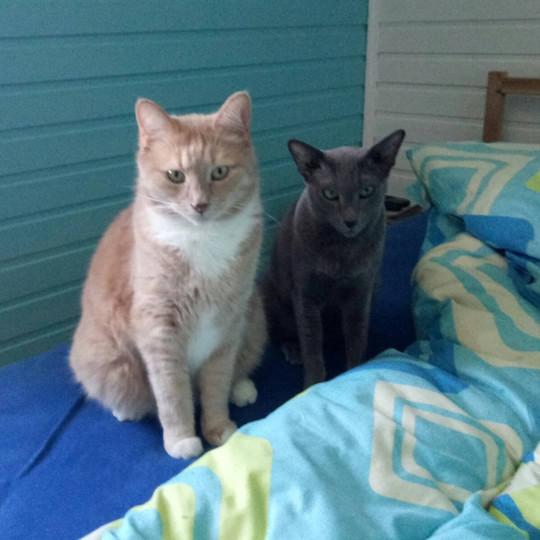Тиша и Кира требуют внимания уже с утра