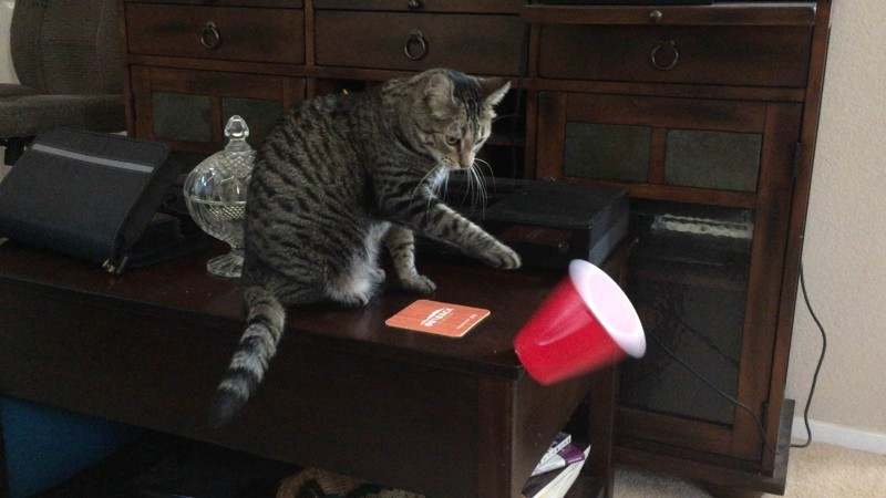 Сбрасывание вещей самый популярный у кошек способ привлечения внимания