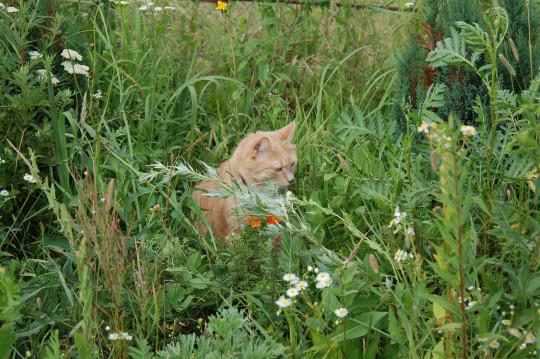 Трава скрывает шлейку