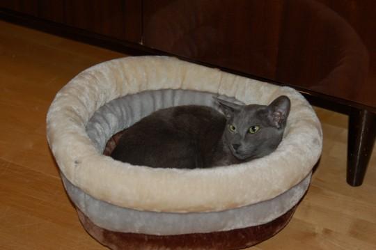 Кошки могут определять время почти так же, как люди