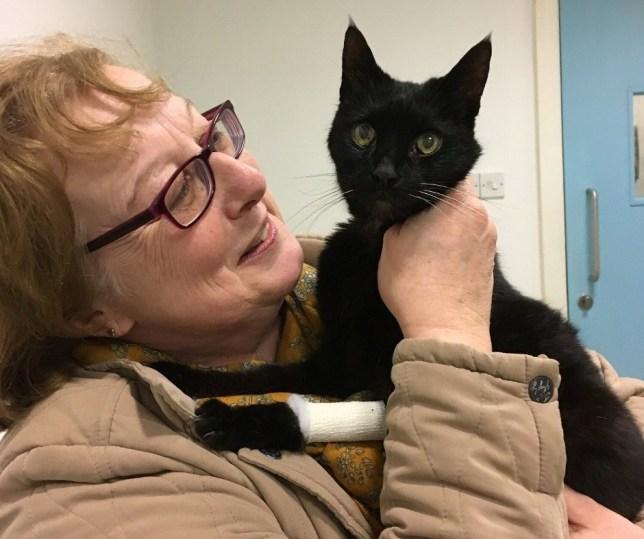 Как только Китти увидела Джулию, тут же прыгнула к ней на руки (фото: Blue Cross /SWNS.COM)
