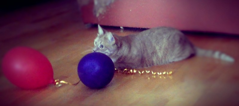 Шарик с гелием и привязанная к нему веревочка - хороший подарок для котика, в него можно играть очень долго, пока тот не свалится с потолка на пол.