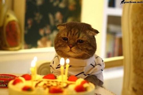 А это подарок котику от человека со странной любовью. Огня котики боятся, сладкого им нельзя, а одежду они терпеть не могут.