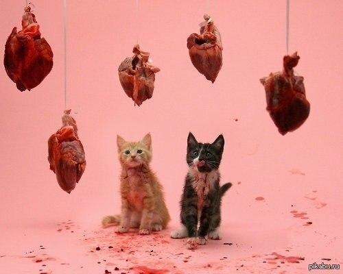 Любовь это - дарить котикам то, что они любят.
