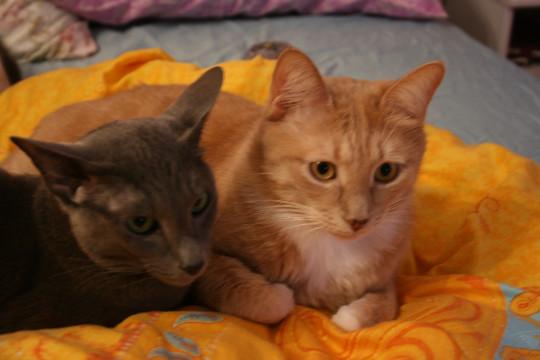 У нас есть кошка-прилипала Кира, которая тревожится, когда остается без меня и кота Тиши.