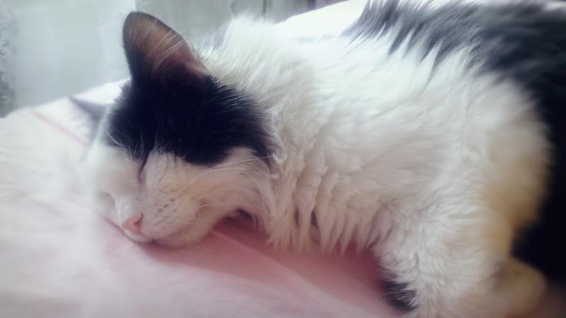 Некоторые думают, что кошке нужно только есть, много спать и ходить в туалет, но это не так.
