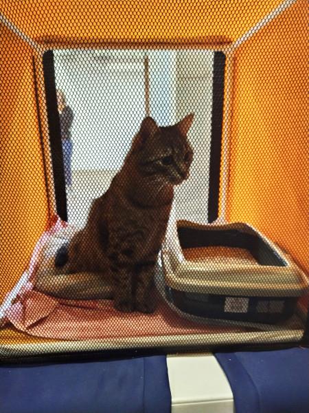 Котик Степашка пристроился на фестивале Кошки-Мышки!