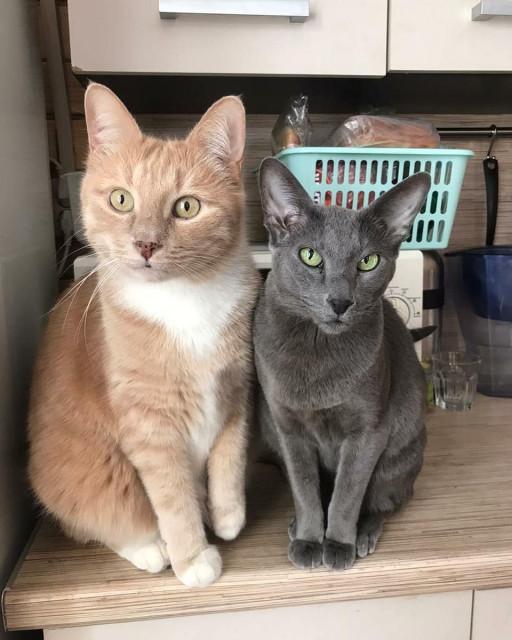 Иерархия домашних кошек и борьба за территорию