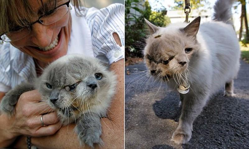 Самый долгоживущий кот Януса по имени Фрэнк и Луи был занесен в книгу рекордов Гиннеса