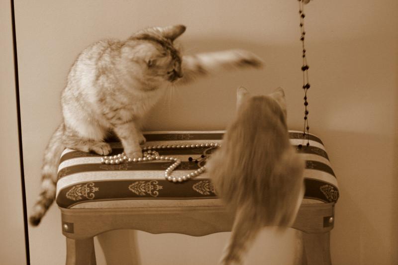 Кошка Жужа и мой котенок Тиша