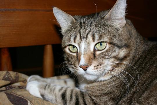 Пожилые кошки не всегда страдают деменцией. Шурик был удивительно умен и мудр.