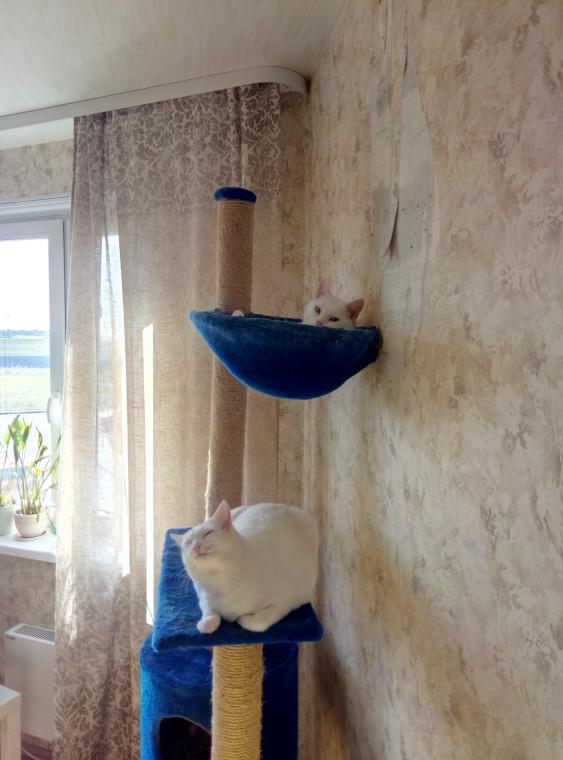 Комплекс с платформой и гамаком для взрослых кошек