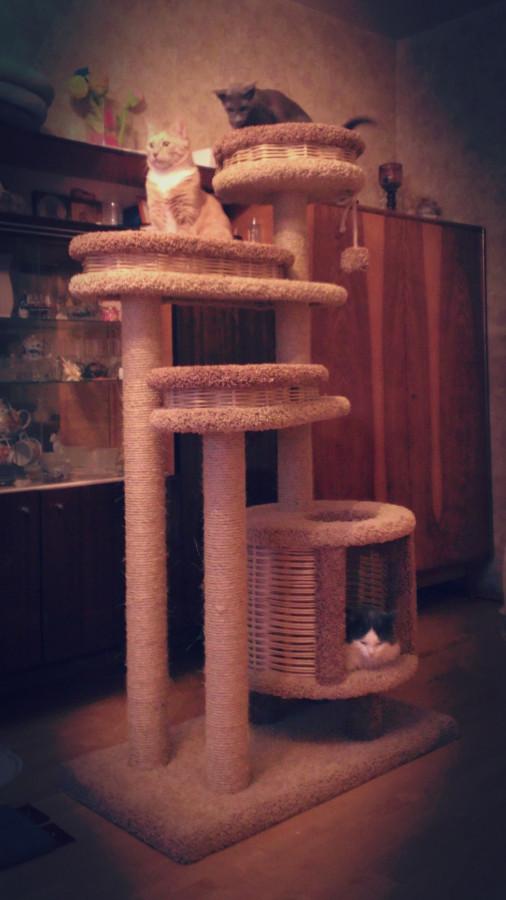 Усиленный комплекс для взрослых кошек. Обратите внимание на правильный домик. Комплекс установлен возле шкафов, на которых размещены дополнительные лежаки.