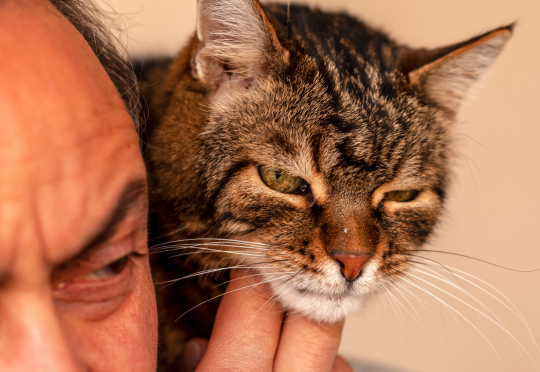 Как кошки говорят с людьми и между собой?